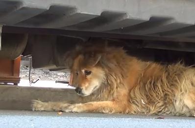 Google Mapで発見した野良犬を確保して飼うことに!