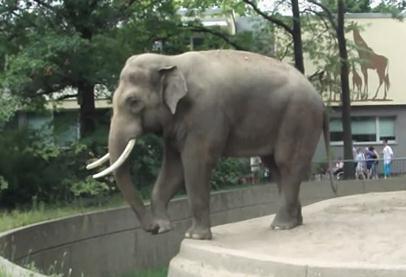動物園のゾウがとんでもない暴挙に!