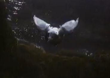 水中を飛ぶ鳥