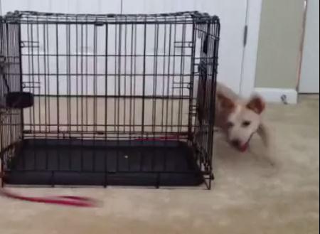 どうやっても追いつけない物を追いかける子犬