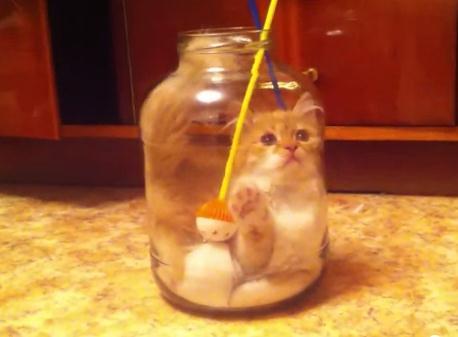 遊びに夢中になっていた猫、ボトルにイン