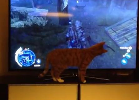 ゲームの画面の犬が気になる猫