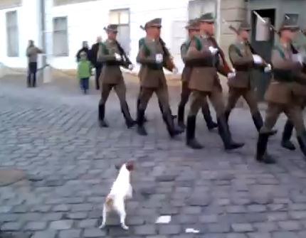 格式高き兵隊の行進にジャックラッセルテリア乱入
