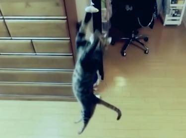 驚異的な跳躍力を持つ猫