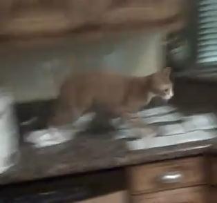 猫の足に紙がくっついて大パニック