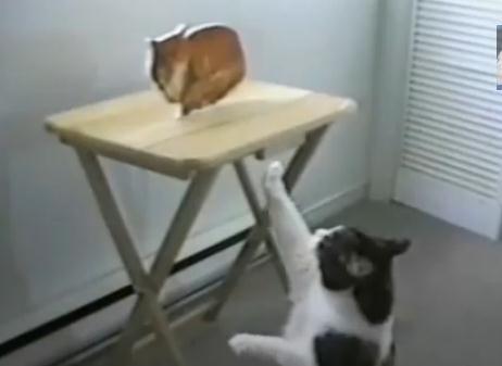 絵のネコと戦うネコ