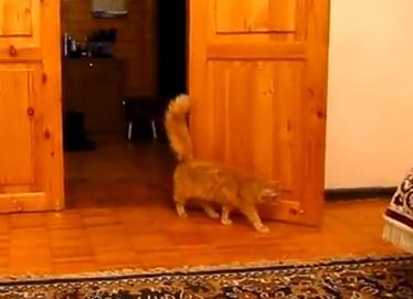 スーパーマリオのジャンプ音と連動する猫