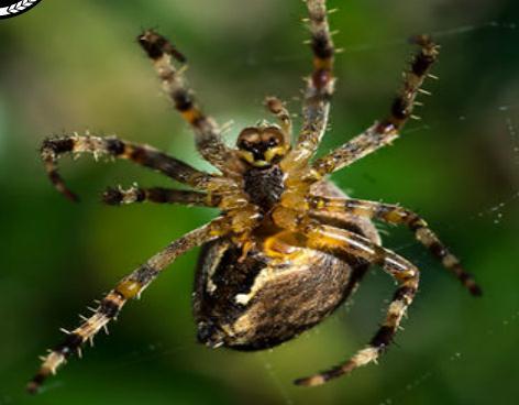 蜘蛛の巣ができるまでのTime-laps映像