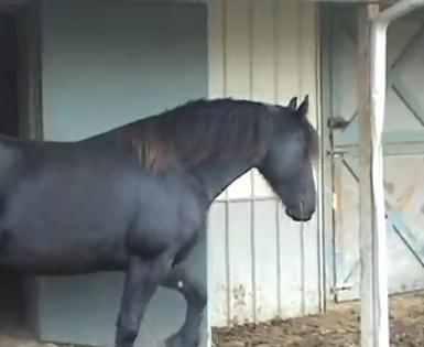 賢い馬にはドアは無意味?