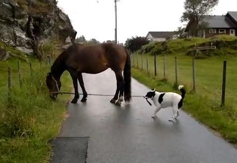 馬の散歩をする犬