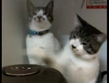 炊飯器 vs. 猫