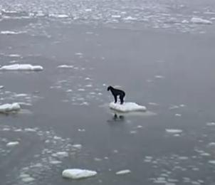 氷の上に取り残されたワンコの救出