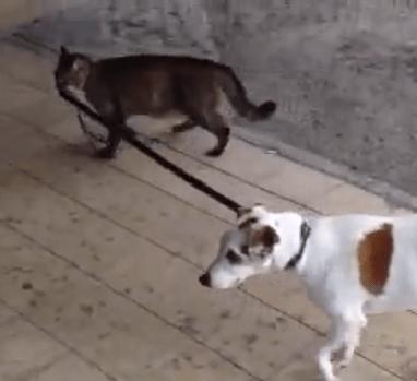 犬のリードを引く猫
