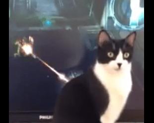 兵器による攻撃にも涼しい顔の猫