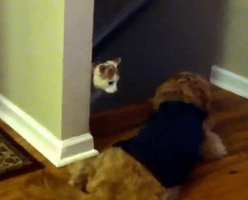 階段の上にワンコが