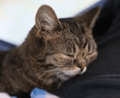 猫のカワイイいびき