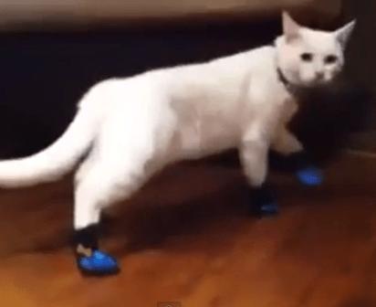 靴を履かされ困り果てる猫