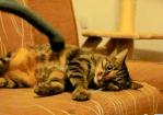掃除機マッサージを受ける猫