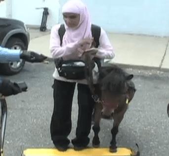 盲導犬ならぬ盲導馬