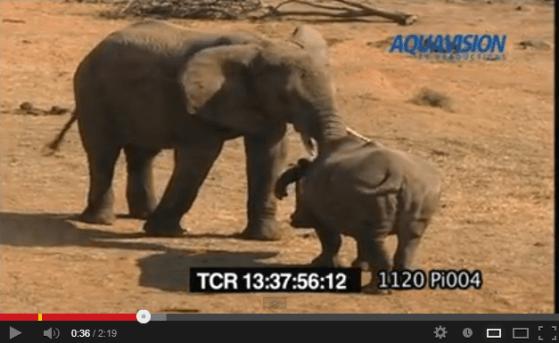 サイ vs. ゾウ