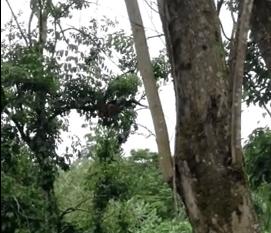 木から落ちてしまったナマケモノ