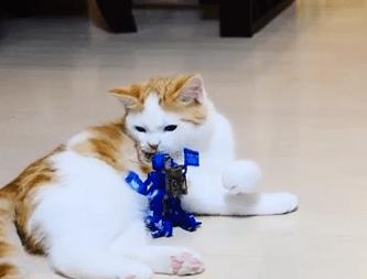 格闘ロボットに攻撃されるネコ