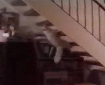 裏から階段を登る猫