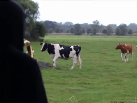 牛さんにサックスを聴いてもらいましょ
