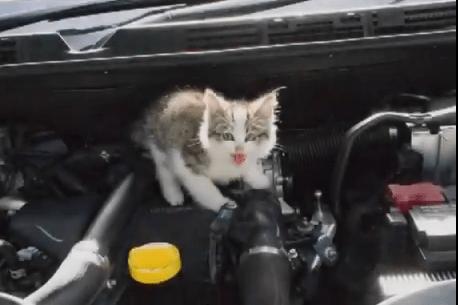 エンジンルームに入って267kmの長旅をした子猫