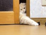 頑張ったけど窓を開けられなかった猫