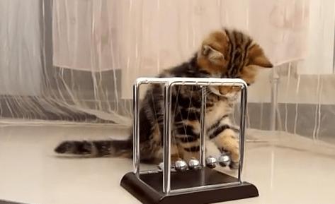 物理の勉強をする子猫