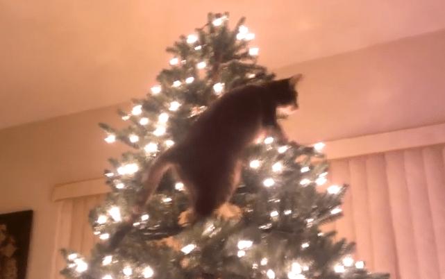 クリスマスツリー登頂を目指すニャンコに災難