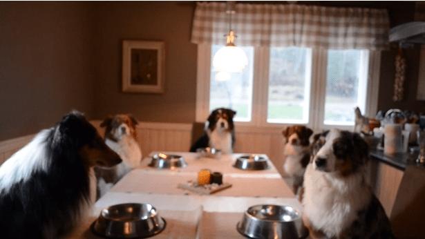 ワンコ、食事の前に神に祈りを