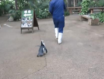 飼育員に恋をしたペンギン