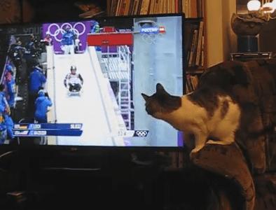 ソチ五輪のリュージュを観戦するネコ