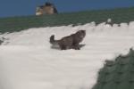 屋根の雪と共に落ちる猫