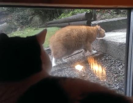 スローモーション猫とそれを観察する猫