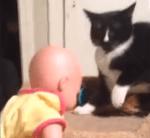 赤ん坊の人形に激しい猫パンチの連打を浴びせる猫