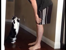 何度でも抱っこしたくなる猫