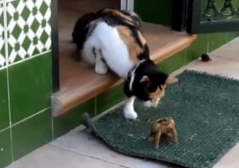 猫 vs. カエル