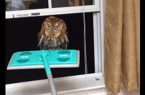 家に迷い込んだフクロウを追い出す方法