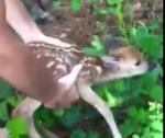 水辺で溺れかけていた鹿の赤ちゃんを救助