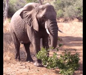 象をあまり怒らせないように…