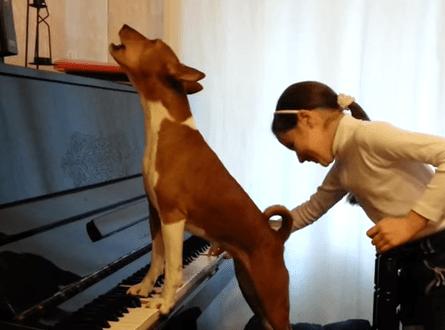 バセンジーの声、ピアノにあわせて歌うバセンジー