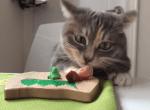 寿司に舌鼓を打つニャンコ