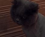 毛を刈られたことを恨む猫