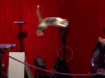 助走なしで記録的なジャンプを見せる猫
