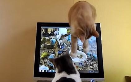 液晶モニターに映る鳥や魚を狙うニャンコと…