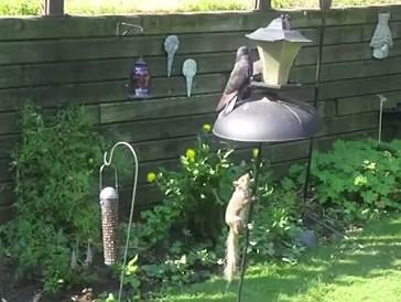 リスが鳥の餌を手に入れるためにとった行動
