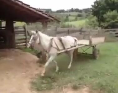 車庫入れの上手な馬